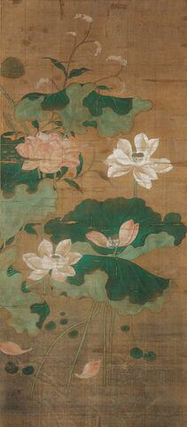 Pink and White Lotus